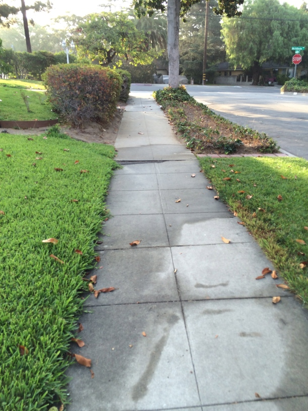 The first steps on my walk last Friday. The first steps are the most important?